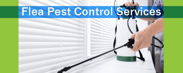 Flea Pest Control Service