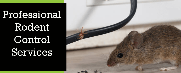 Professional Rodent Treatment
