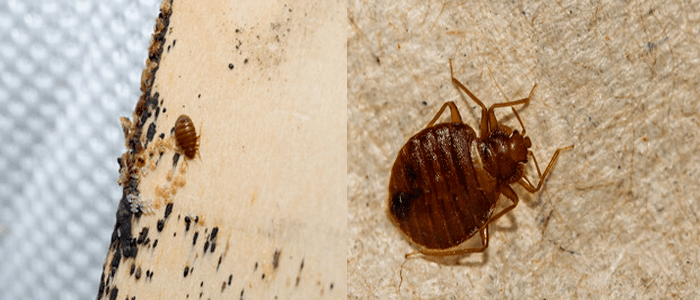 Reliable Bed Bug Control Services