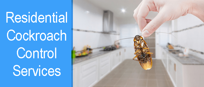 Residential Cockroach Control Service